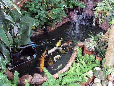 สวนหย่อมน้ำตกบ่อปลา